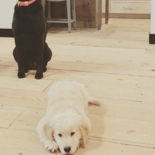 Dogs of Twin Companies